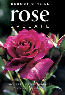 rose-svelate